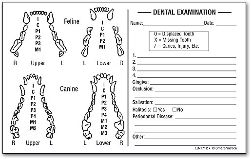Cat Dog Dental Exam Label By SmartPractice