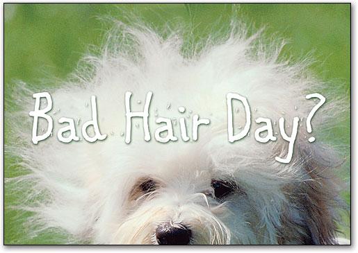 Bad Hair Day Postcard Smartpractice Veterinary