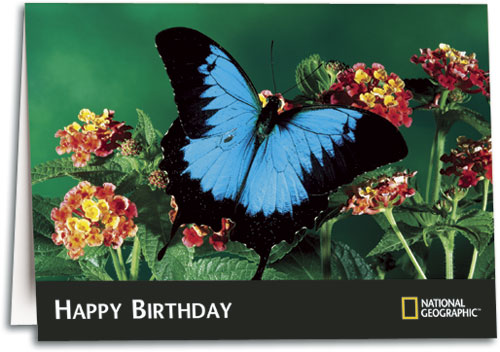Nature and scenic photograph birthday cards smartpractice chiropractic blue butterfly birthday folding card by national geographic m4hsunfo