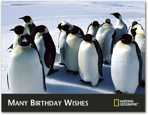 Penguin Birthday Wishes 4 Up Laser Card