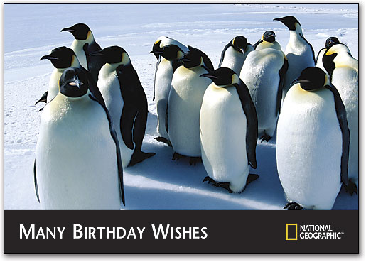 Penguin Birthday Wishes Postcard By National Geographic
