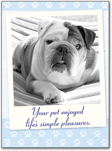 Veterinary Saying Goodbye Sympathy Folding Cards