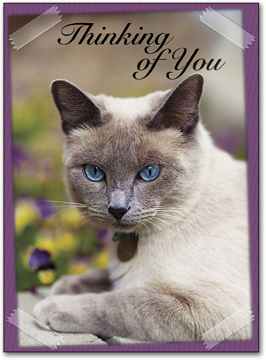 cat themed sympathy cards smartpractice veterinary