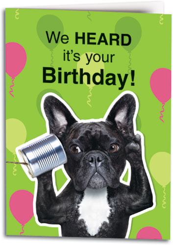 Boston Terrier Birthday Customizable Folding Card Smartpractice