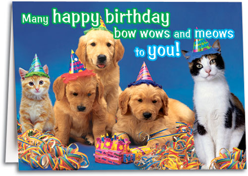 Bows Wows Meows Birthday Folding Card By SmartPractice