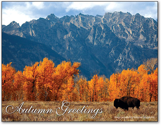 Autumn greetings thanksgiving 4 up laser card smartpractice autumn greetings thanksgiving 4 up laser card by national geographic m4hsunfo