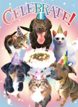 Veterinary themed birthday cards smartpractice veterinary bookmarktalkfo Image collections